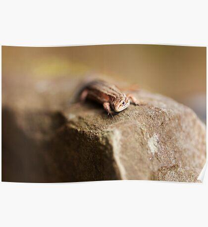 Female Common Lizard Poster