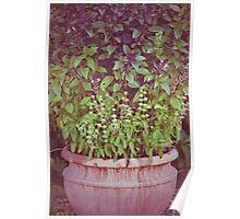 Pots & Plants Poster