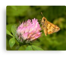 A TINY male Fiery Skipper. Canvas Print
