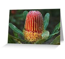 Banksia menziesii Greeting Card