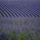 Lavender fields... by LadyPixbo