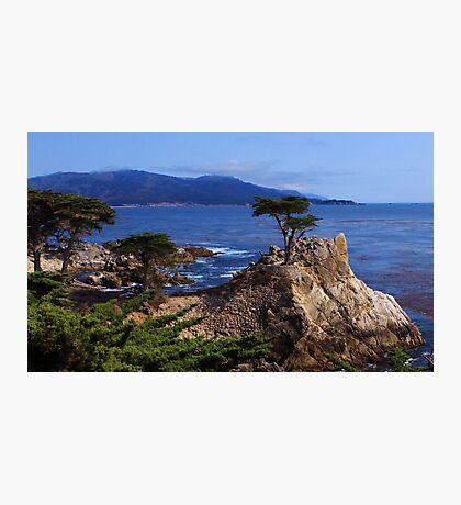 Lone Cypress Photographic Print