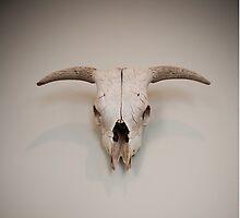 Western Steer Skull Head by doorfrontphotos