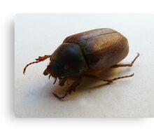 Christmas Beetle - Up Close Canvas Print