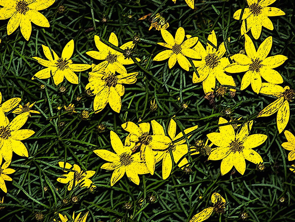 Patch of coreopsis flowers by Sarah Edmonds