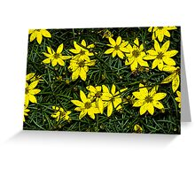 Patch of coreopsis flowers Greeting Card