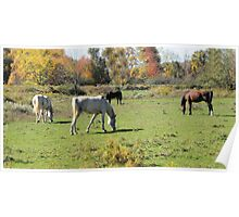 Pasture Of Horses Poster