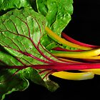 Swiss Chard by Samantha Wong