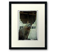 Gorgeous George Framed Print