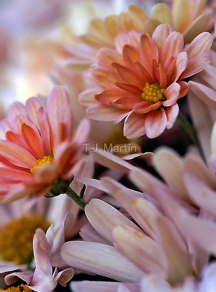 Peach Mums by T.J. Martin