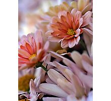 Peach Mums Photographic Print