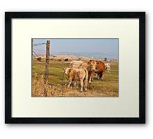 Interrupting Cows Framed Print