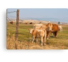 Interrupting Cows Canvas Print