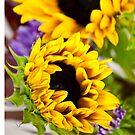 Hot Yellow Sunflower by doorfrontphotos