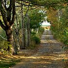 Autumn Road to the Ocean by Monica M. Scanlan