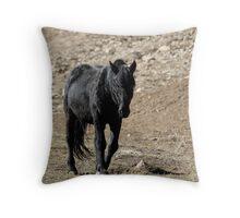 Galaxy, Pryor Mountain Stallion Throw Pillow
