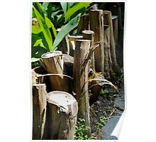 Stumps Along a Walkway Poster