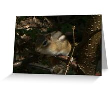 chipmunk on a branch Greeting Card