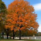 Sweet Sugar Maple by Debbie Robbins