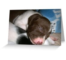 puppies  Greeting Card