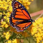 Monarch Butterfly by RebeccaBlackman