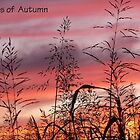 Signs of Autumn  by lynell
