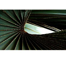Curvature of Plant Life Photographic Print