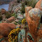 Cliff Blooms by Bob Larson