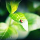 My friend, Travis the Beatle by SimPhotography