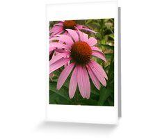 purple echinacea blooms Greeting Card