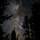 Galactic Forest by JimJohnson