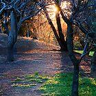 Sunset Through trees by crickmedia