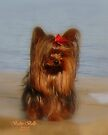 Our Yorkie Princess by Gail Bridger