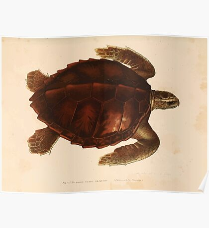 Leopold Joseph Fitzinger 1867 0185 Picture Atlas for popular scientific natural history of vertebrates Poster