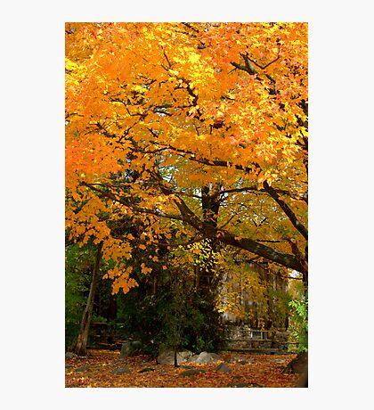 A Memorable Fall Scene...  Photographic Print