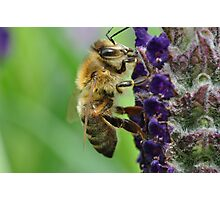 Bee's Or Bookwork Photographic Print