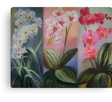 butterfly orchids trio Canvas Print