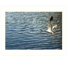 Brid flying over pond 3 Art Print