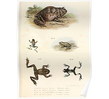 Leopold Joseph Fitzinger 1867 0193 Picture Atlas for popular scientific natural history of vertebrates Poster