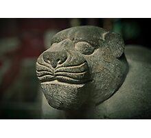 lao hu Photographic Print