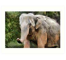 The Elephant, Paignton Zoo, UK Art Print