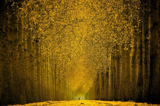 cycle in gold by LarsvandeGoor