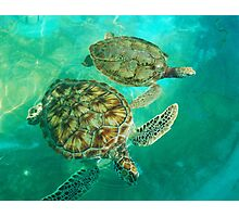 Sea Turtle Swim Photographic Print