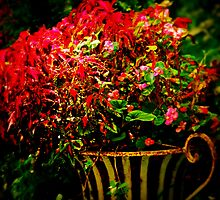 Scarletts & Begonias by © Jolie  Buchanan