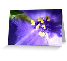 Purple Bloom Greeting Card