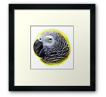 African grey parrot realistic painting Framed Print