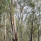 Gums by Harry Oldmeadow