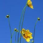 Granny Flowers by Tam  Locke