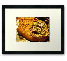 Swansea Moray Framed Print