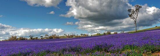 The Colour Purple by GailD